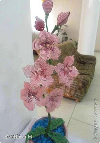 Наконец!!!Закончена орхидея,успели к концу учебого года!!! Орхидею сделала Роза Б.,7кл,занимается  в объединении 1 год!!! фото 2