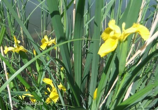 Фото  с прогулки...весна, солнышко,море цветов, птицы поют- романтическое время года... фото 7