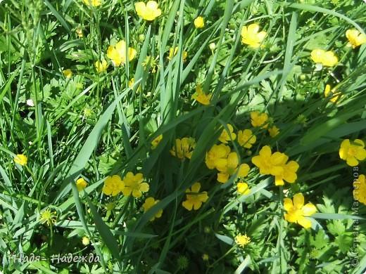 Фото  с прогулки...весна, солнышко,море цветов, птицы поют- романтическое время года... фото 11