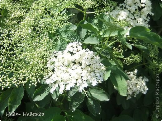 Фото  с прогулки...весна, солнышко,море цветов, птицы поют- романтическое время года... фото 2