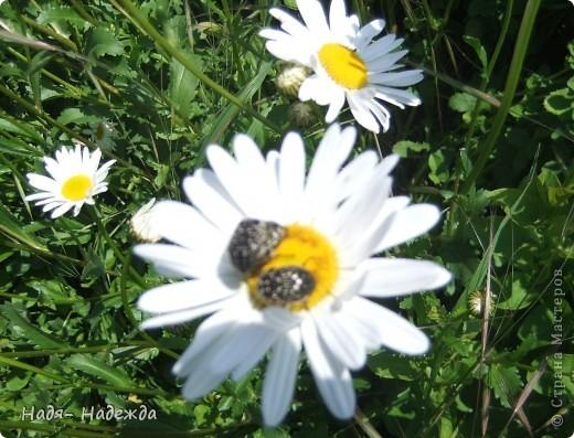 Фото  с прогулки...весна, солнышко,море цветов, птицы поют- романтическое время года... фото 16