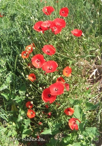 Фото  с прогулки...весна, солнышко,море цветов, птицы поют- романтическое время года... фото 1