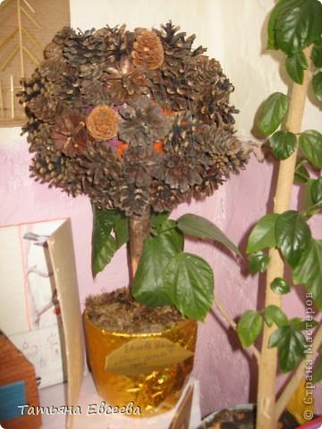 Вот такое шишко-дерево мы сделали одним осенним вечерком на праздник осени! Стоит оно в уголке детского садика.