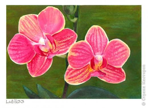Орхидеи. Акварель, А4.