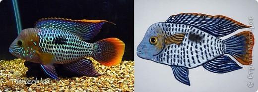 Знакомьтесь, Акара бирюзовая, в моем исполнении. Делала в подарок для одного любителя аквариумных рыбок. Надеюсь подарок понравится!  фото 1