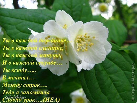 стих мой, фото подруги (р.Б. Татиана).... фото 9