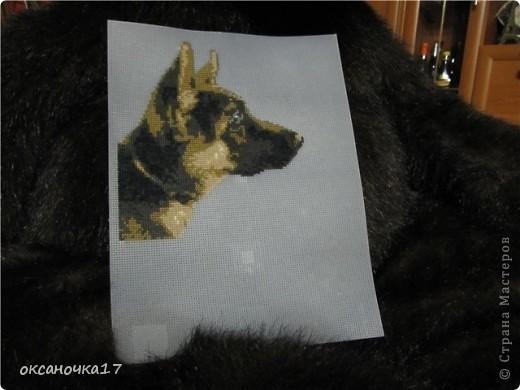 вышивала нашу собачку.схему делала через программу по фото.вышивка на пластиковой канве. фото 1