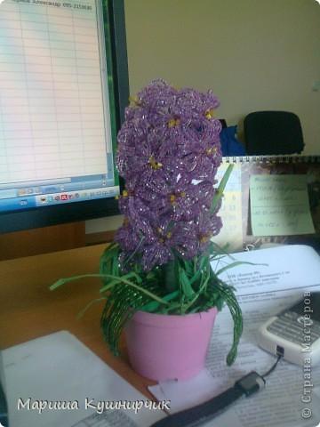 Вот и он!!!Весенний любимый цветочек) фото 1