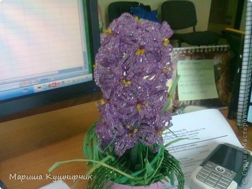 Вот и он!!!Весенний любимый цветочек) фото 4