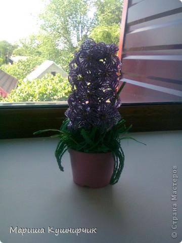 Вот и он!!!Весенний любимый цветочек) фото 5