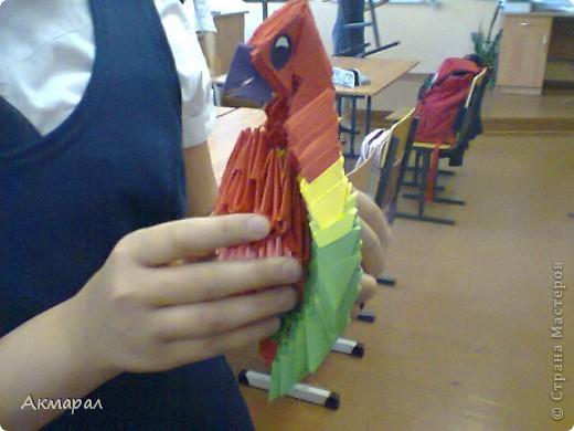 Можно сказать что этот попугай почти что пиратский. фото 4