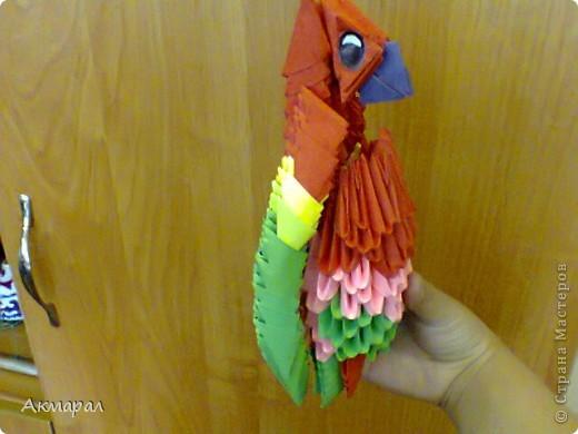 Можно сказать что этот попугай почти что пиратский. фото 2