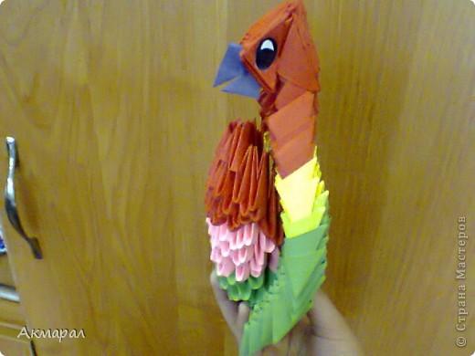 Можно сказать что этот попугай почти что пиратский. фото 3