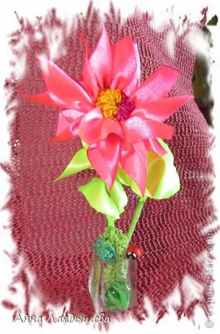 А у меня вот такие цветы-счастья! фото 18