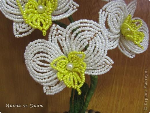 """Вот и """"выросла"""" у меня орхидея № 3 - белая! Решила посадить ее так.  фото 3"""