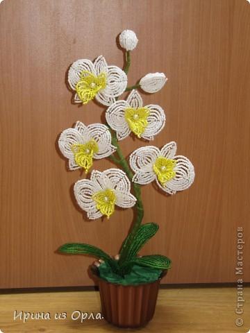 """Вот и """"выросла"""" у меня орхидея № 3 - белая! Решила посадить ее так.  фото 1"""