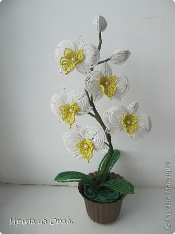 """Вот и """"выросла"""" у меня орхидея № 3 - белая! Решила посадить ее так.  фото 2"""