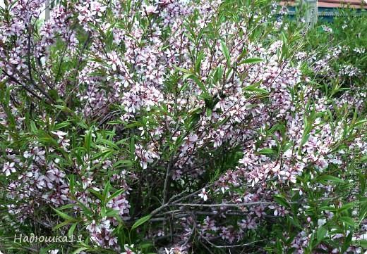 Моими любимыми цветами являются тюльпаны. До сих пор мой муж удивляется, почему мой выбор пал именно на них, мол обычные садовые цветы. Но посмотрите, Какие они шикарные! фото 11