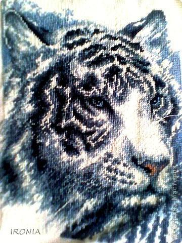 мой белый тигр