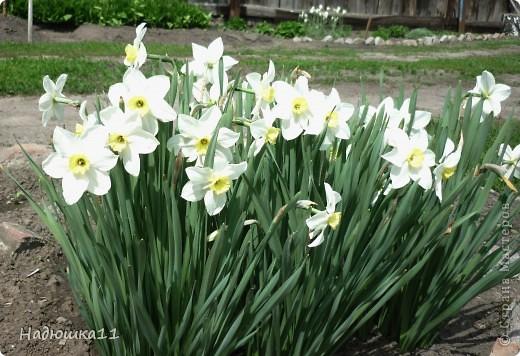 Моими любимыми цветами являются тюльпаны. До сих пор мой муж удивляется, почему мой выбор пал именно на них, мол обычные садовые цветы. Но посмотрите, Какие они шикарные! фото 10