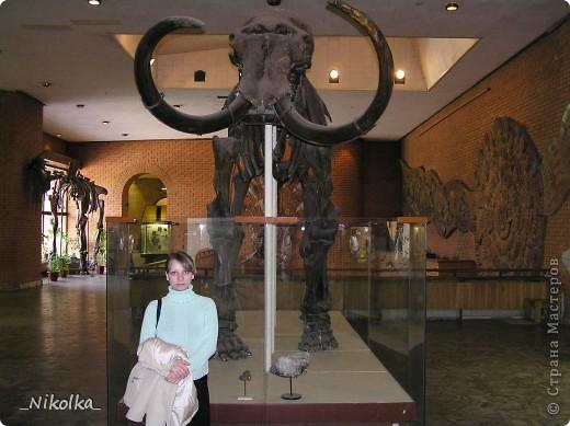 31 мая - день Палеонтологического музея. В связи с этим, хочу пригласить вас на небольшую виртуальную экскурсию. Палеонтологический музей по праву считается одним из крупнейших естественноисторических музеев мира. Экспозиция Музея посвящена эволюции органического мира Земли. История Института и Музея восходит к основанной в 1716 г. Петром I Кунсткамере, в которую поступали интересовавшие царя кости и зубы млекопитающих ледникового периода, а также другие диковинные находки. Ко времени основания Институт обладал уникальными музейными фондами. Первоначально экспозиция располагалась в Ленинграде в двух залах общей площадью 1500 кв. м и была открыта для свободного посещения. А в 30-х годах переехала из Ленинграда в Москву. В 1937 г. к XVII сессии Международного Геологического конгресса Палеонтологический музей был открыт. Он располагался на Большой Калужской улице (позднее переименованной в Ленинский проспект), в доме 16, в помещении манежа графа Орлова. Экспозиционная площадь первоначально составляла всего 700 кв. м. Тем не менее, свое место в Музее нашли многие замечательные палеонтологические объекты – сборы разных поколений отечественных палеонтологов, проводившиеся как на территории России, так и за ее пределами.  В годы Великой Отечественной войны Музей был закрыт, а значительная часть его коллекций отправлена в Алма-Ату. Сразу после возвращения из эвакуации, сотрудники приступили к восстановлению экспозиции. В 1944 г. Музей вновь распахнул свои двери для широкой публики. Тогда же Институт возглавил Ю.А.Орлов. Благодаря проведению успешных полевых работ и раскопок палеонтологические коллекции беспрестанно пополнялись. Для новых интересных находок все сложнее было найти место в экспозиции, а тесное помещение стало практически непригодным для музейной работы. В 1954 г. Музей пришлось закрыть. фото 3