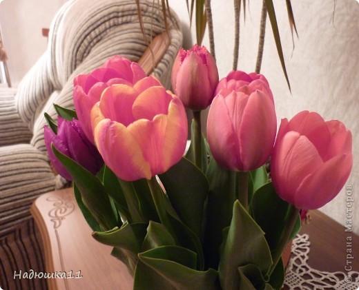 Моими любимыми цветами являются тюльпаны. До сих пор мой муж удивляется, почему мой выбор пал именно на них, мол обычные садовые цветы. Но посмотрите, Какие они шикарные! фото 8
