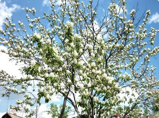 Моими любимыми цветами являются тюльпаны. До сих пор мой муж удивляется, почему мой выбор пал именно на них, мол обычные садовые цветы. Но посмотрите, Какие они шикарные! фото 12