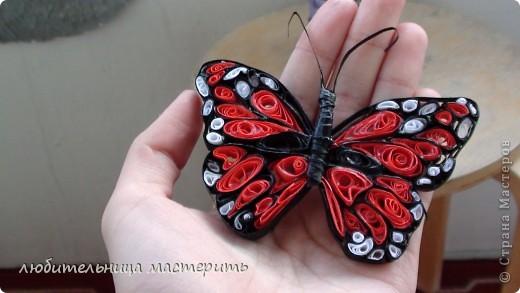 Это мой самый 1-ый опыт в Квиллинге:) Всегда была равнодушна к квиллингу,не тут то было увидела бабочек:)и решила что будет моё новое увлечение:) Вроде получилось) фото 3