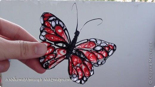 Это мой самый 1-ый опыт в Квиллинге:) Всегда была равнодушна к квиллингу,не тут то было увидела бабочек:)и решила что будет моё новое увлечение:) Вроде получилось) фото 4