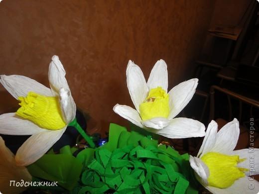 Нарциссы, подаренные в апреле фото 3