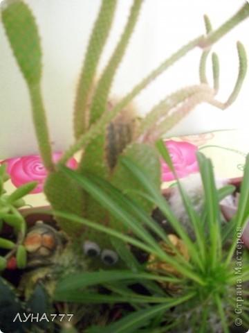 """Хотела бы поделиться с жителями нашей страны своей большой любовью в жизни к """"цветам"""".Это композиция из кактусов и сукулентов, посадила ее в феврале этого года, некоторые уже хорошо разрослись.Некоторые докупала и досаживала постепенно. фото 3"""