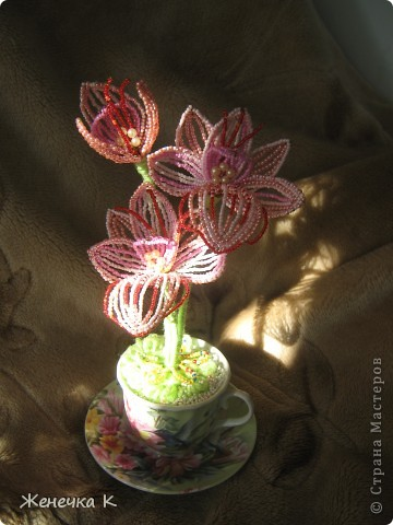"""Орхидея """"Розовый фламинго"""" фото 5"""
