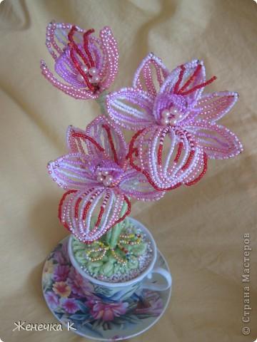 """Орхидея """"Розовый фламинго"""" фото 1"""