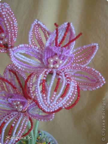 """Орхидея """"Розовый фламинго"""" фото 2"""