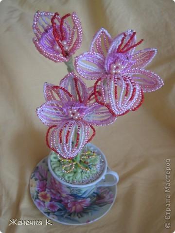 """Орхидея """"Розовый фламинго"""" фото 3"""