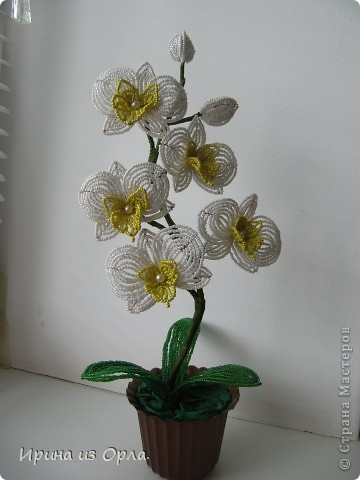 """Вот и """"выросла"""" у меня орхидея № 3 - белая! Решила посадить ее так.  фото 8"""