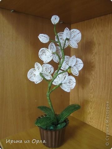 """Вот и """"выросла"""" у меня орхидея № 3 - белая! Решила посадить ее так.  фото 4"""