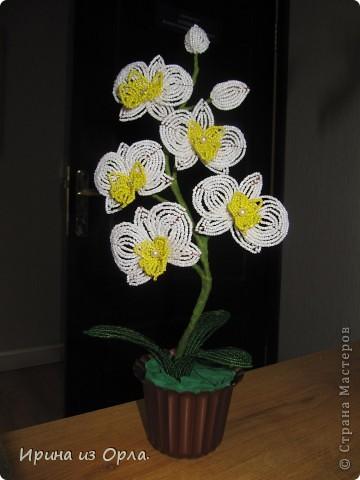 """Вот и """"выросла"""" у меня орхидея № 3 - белая! Решила посадить ее так.  фото 6"""