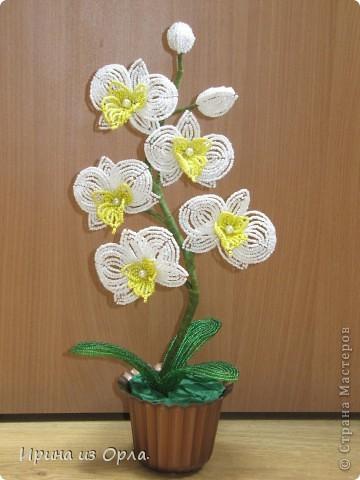 """Вот и """"выросла"""" у меня орхидея № 3 - белая! Решила посадить ее так.  фото 5"""