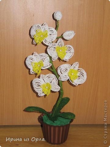 """Вот и """"выросла"""" у меня орхидея № 3 - белая! Решила посадить ее так.  фото 7"""