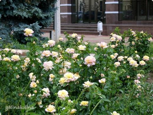 По календарю вчера наступило лето,а я хочу показать вам,дорогие девочки,каким был последний день весны этого,2012 года,в моём родном городе,в Тирасполе.  фото 14