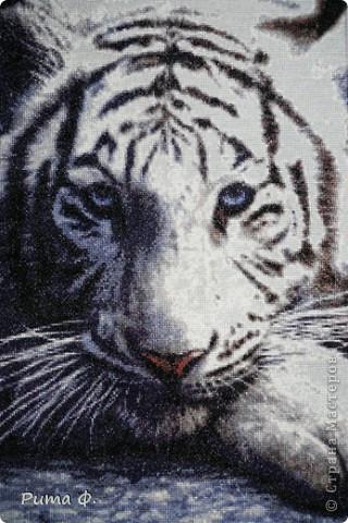 Белый Тигр | Страна Мастеров..
