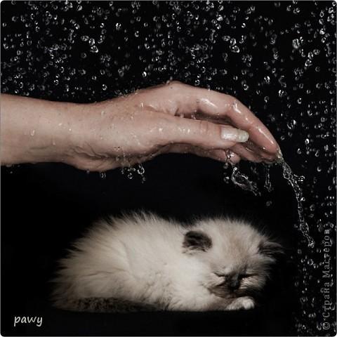 Маленький котенок под дождем промок... фото 17