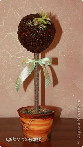 Второе кофейное дерево фото 1