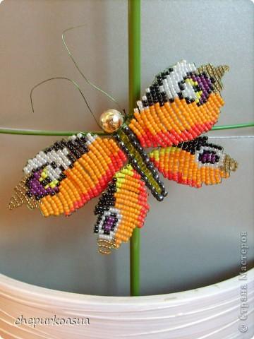Эта моя самая любимая бабочка. Я сплела её по собственно придуманной схеме. Эта бабочка украшает мамин любимый цветок. фото 1
