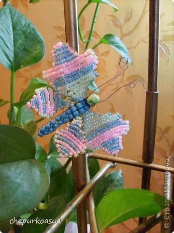 Эта моя самая любимая бабочка. Я сплела её по собственно придуманной схеме. Эта бабочка украшает мамин любимый цветок. фото 3