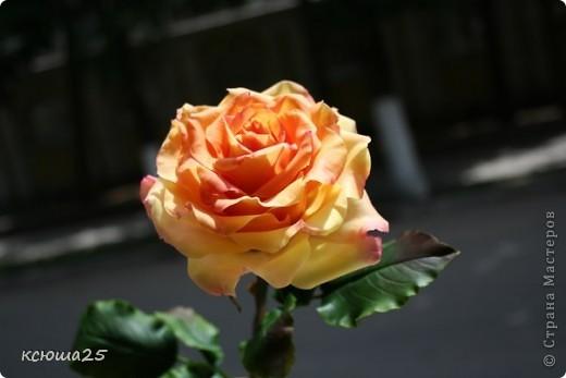 Розы в полный рост)) 70 см (лепка глина) фото 3