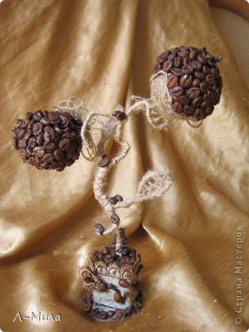 И сново меня потянуло к кофейным деревцам. фото 1