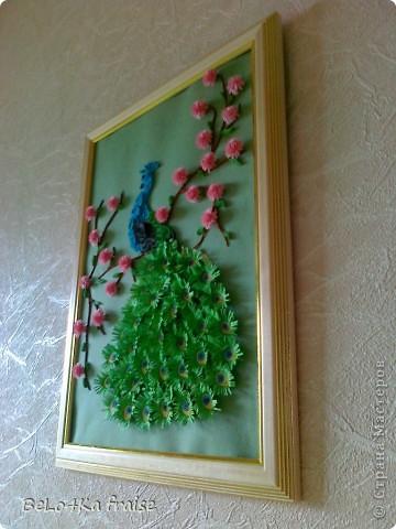"Повторюшки ""ПАВЛИН-ЦАРСКАЯ ПТИЦА"" фото 3"