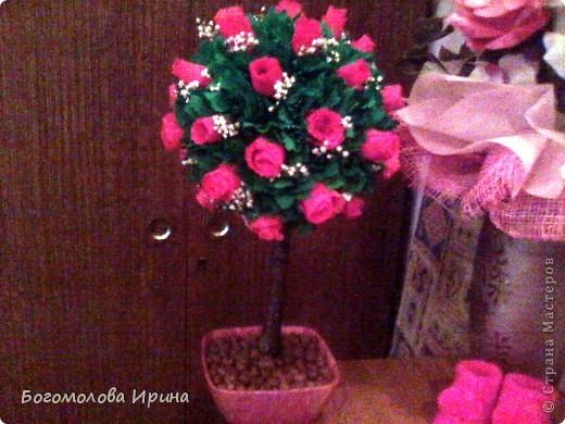 деревца фото 2